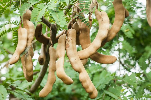 A date called Tamar Hind: Tamarind