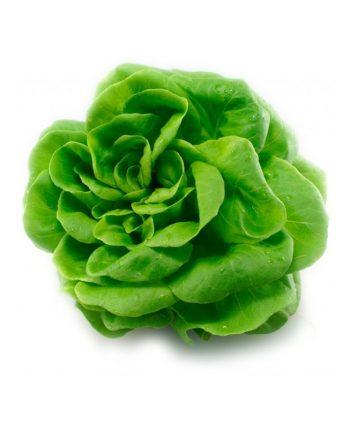 live lettuce